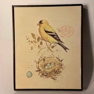"""Framed Bird & Nest Wall Art Print Picture 10""""x 12"""""""